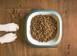 Sklep z karmami i akcesoriami dla psa